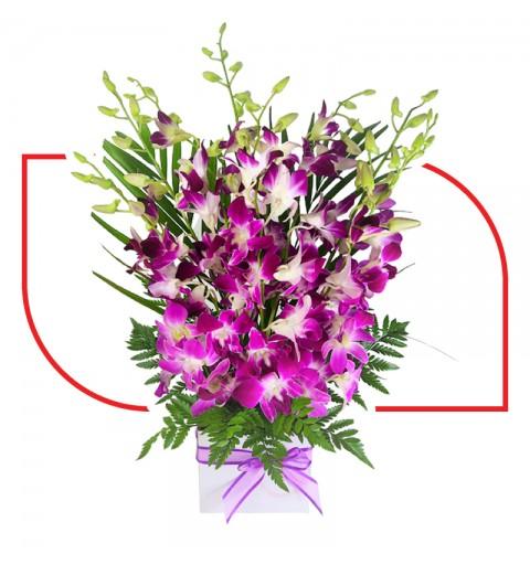 Royal Blooms